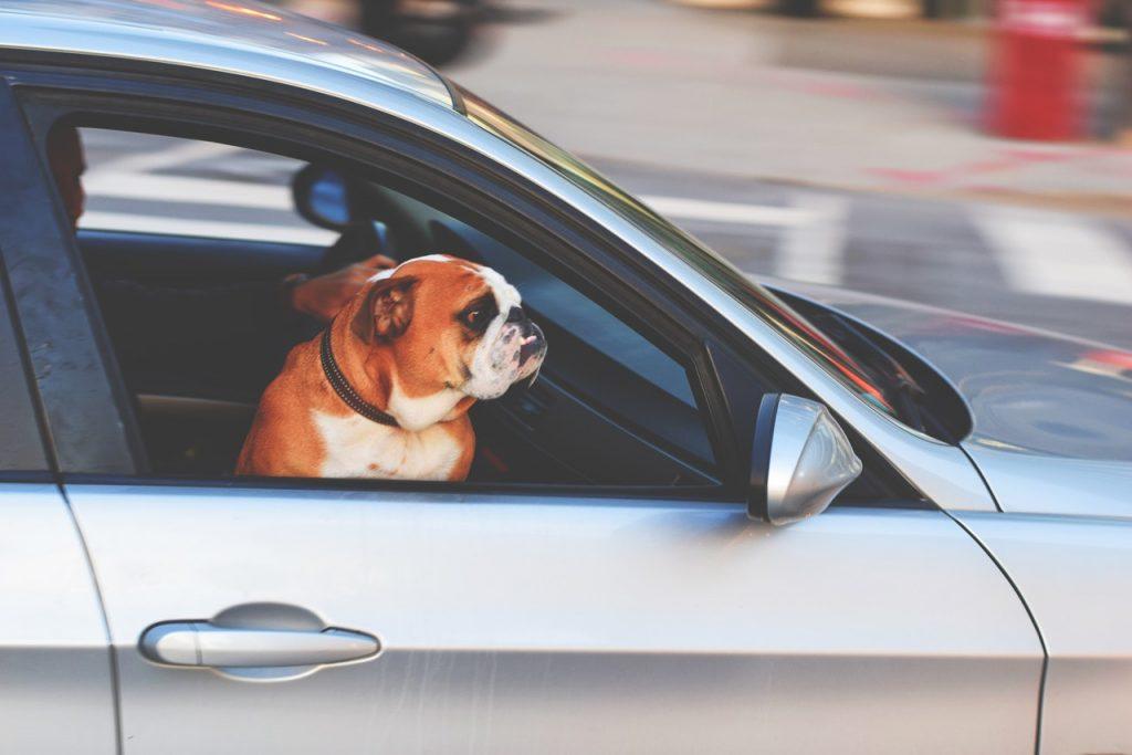 Move Abroad Pet